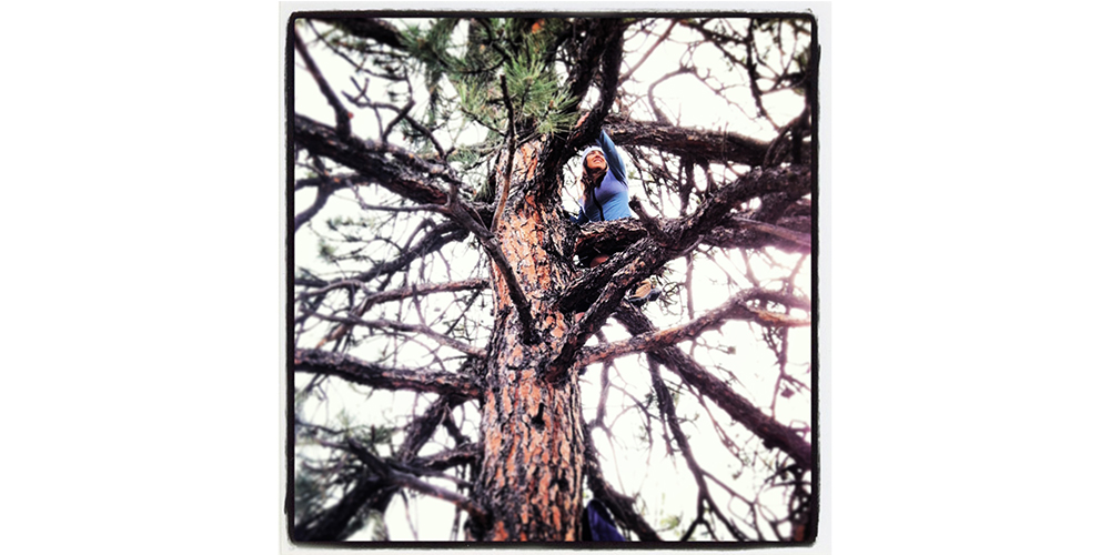 Syl in a Tree